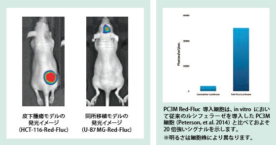 発光細胞(Light Producing Cell...