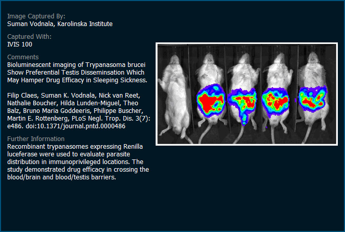 イメージギャラリー Ivis Imaging System 製品情報 創薬研究機器・装置 住商
